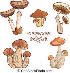 variety of vintage mushrooms