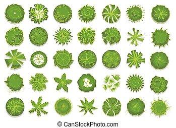 vario, árboles verdes, arbustos, y, arbustos, punta la vista, para, diseño de paisaje, plan., conjunto, de, vector, ilustraciones, aislado, en, un, blanco, fondo.