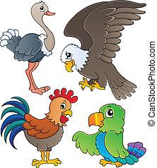 vario, aves, tema, conjunto, 1
