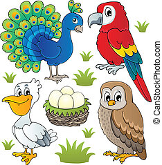 vario, aves, tema, conjunto, 2