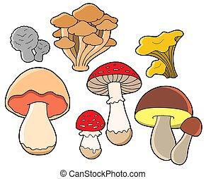 vario, funghi, collezione