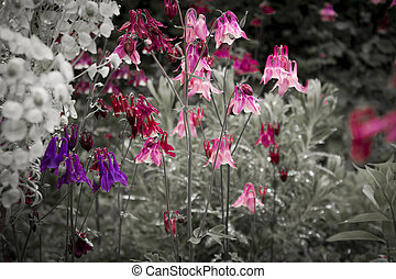 variopinto, primavera, flowers., fondo