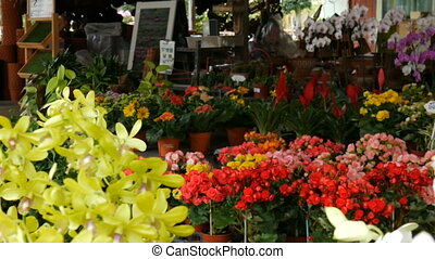 Various beautiful flowers in pots in botanical garden or on a store shelves