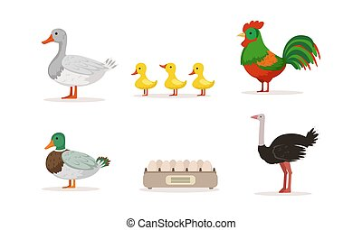Various Breeds of Poultry Set, Goose, Rooster, Mallard, Ostrich Cartoon Vector Illustration