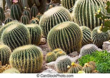 Various cactuses close up grow among stones