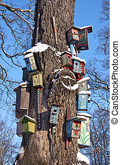 various colorful bird nest boxes houses hang on old tree trunk in park