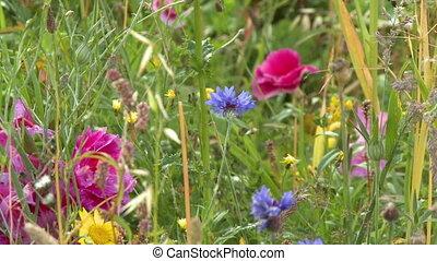 Various Colorful Wildflowers In Field