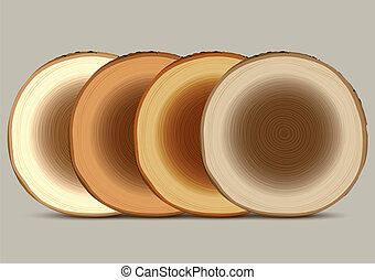 Various cross section of tree stump