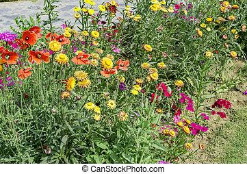 Various flower plants on the roadside