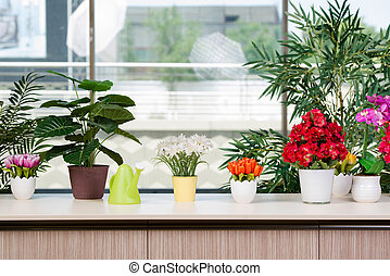 Various flowers arranged in flower pots at hme