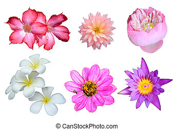 Various Flowers Isolated on White