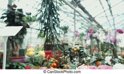 Various flowers on a show-window in the greenhouse
