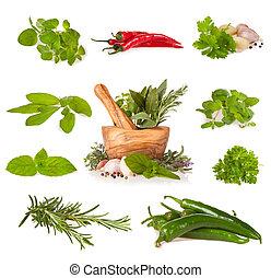 Various fresh herbs on white - Various kind of fresh herbs ...