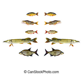 various freshwater fish isolated