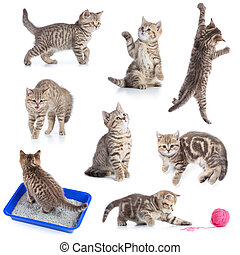 Various funny cats set isolated