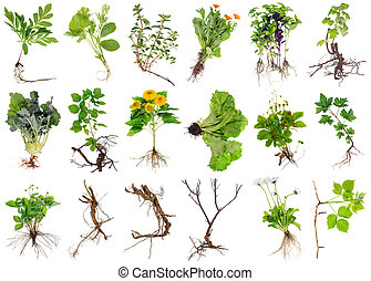 Various garden plants and flowers with roots isolated set