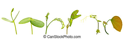 various green young plant on white background