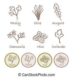 Various herb set, parsley, chive, arugula, chamomile, mint...