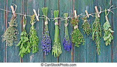 various herbs bundles hanging for drying on a leash