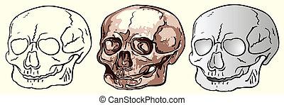 various human skulls - vector