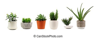 Various indoor cacti and succulents in pots isolated on white