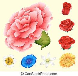 Various kind of flowers