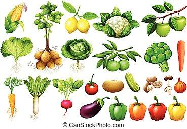 Various kind of vegetables