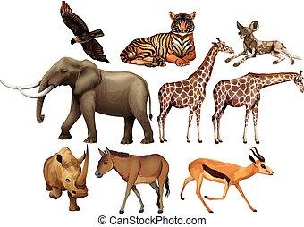 Various kind of wild animals