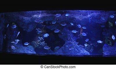 Various kinds of fish swimming in the main tank in aquarium