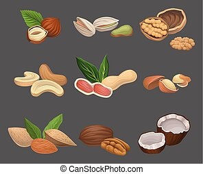 Various kinds of nuts hazelnut, pistachio, walnut, cashew, peanut, brazil, pecan and coconut. Healthy nutrition. Vegetarian food. Organic product. Detailed vector icon
