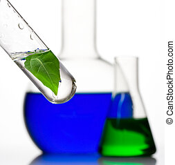 Various laboratory glassware with plant