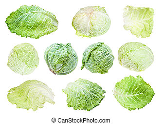 various leaves and heads of savoy cabbages isolated on white...