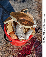 bucket of mushroom picker