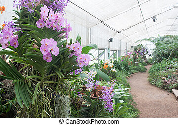 Various of beautiful exotic orchids in the glass house