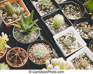 Various of cactus plant in farmland. Industrial and Ornamental plant concept. Agriculture and Nature theme.