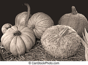 Various of pumpkin in sepia color
