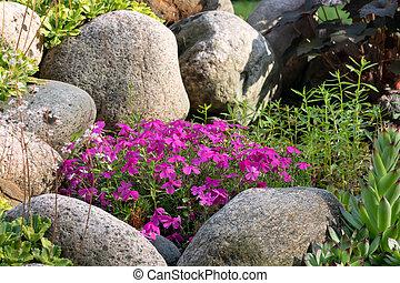 Various perennial plants in a small rockery in a summer garden