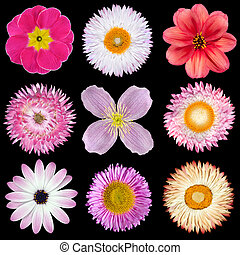 Various Pink, Red, White Flowers Isolated on Black