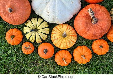 Various pumpkins and squashes on the grass