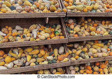 Various pumpkins in shelv