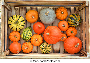 Various pumpkins in the wooden box