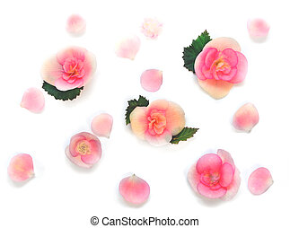 Various Red Flowers Isolated on White Background