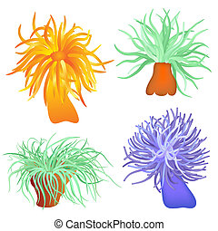 Illustration of the sea anemone - sea flower - vector