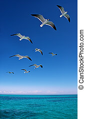 Various seagulls flying over a sea - Various seagulls flying...