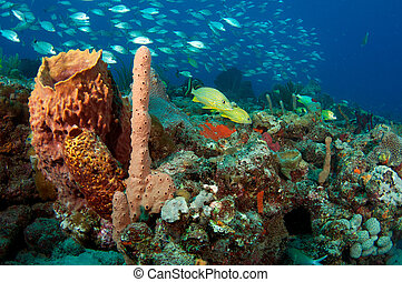Various sponges and fish on a coral reef.