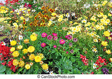 Various summer flowers on the garden bed