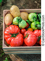 Various tomatoes and cucumbers in wooden box