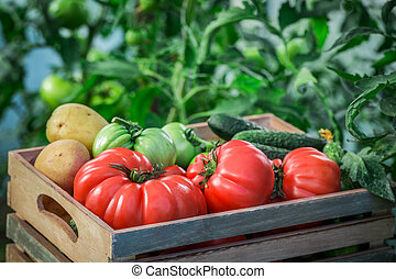 Various tomatoes and cucumbers to groceries