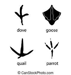 Various traces of poultry. Goose, dove, parrot, quail