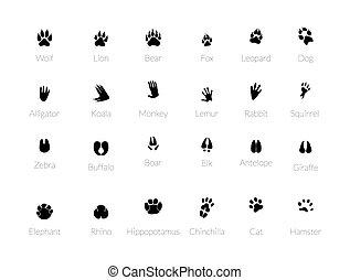 Various traces of predators.